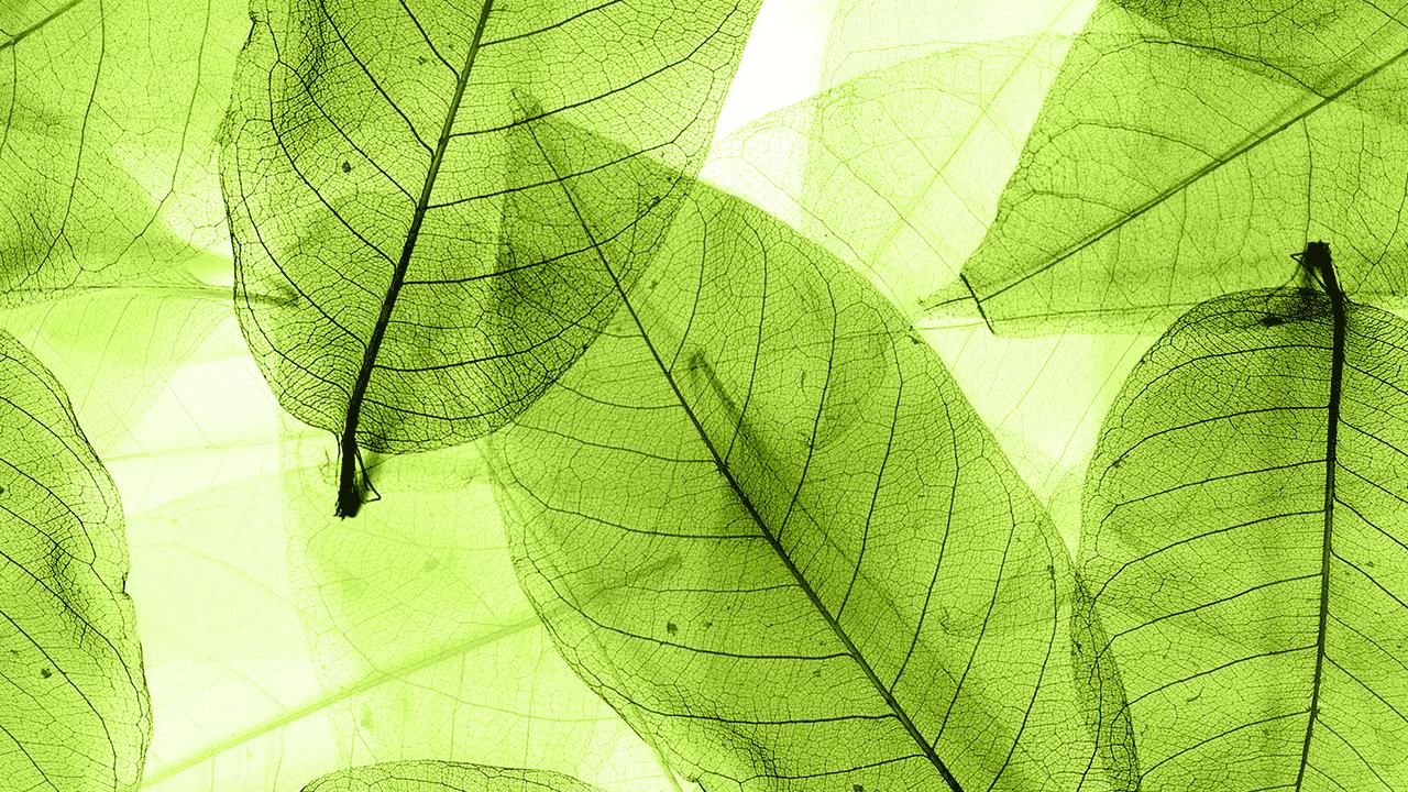 Image of Landscape designer in Brisbane